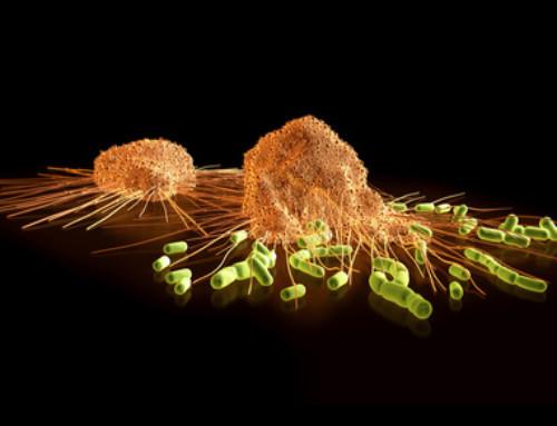 Autoimmune diseases and mobile phones